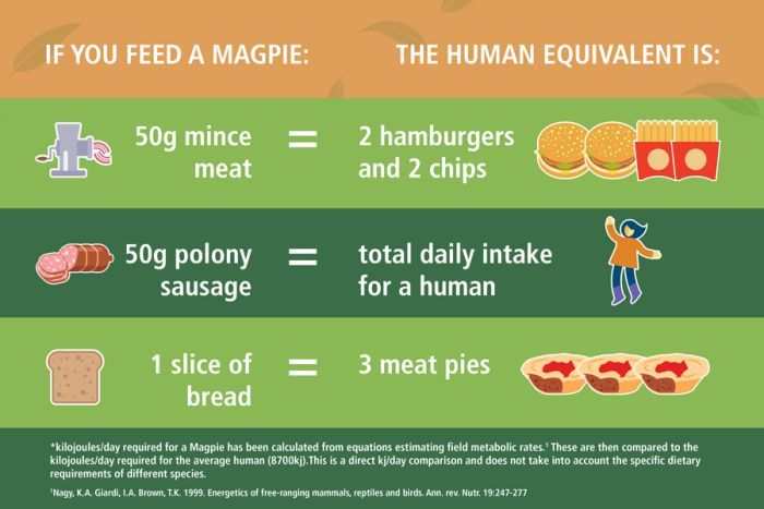 A colourful graphic showing how mince, sausage and bread affect magpie health.